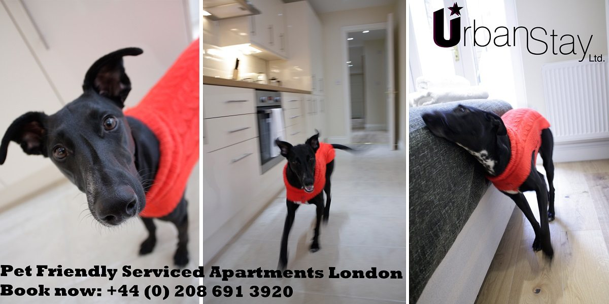Pet Friendly Apartments London - Oxford Gardens Apartments Notting Hill - Urban Stay