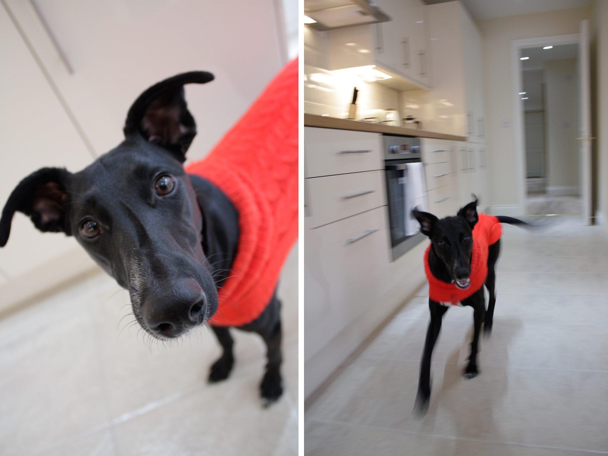 Pet Friendly Apartments London Pet Friendly Accommodation London