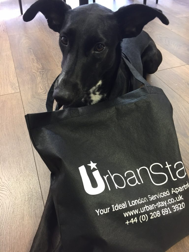FREE Pet welcome pack with Urban Stay pet friendly apartments London - Book now! +44 (0) 208 691 3920