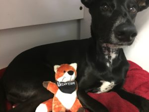 Spanish Stray Dog Adopted In Uk