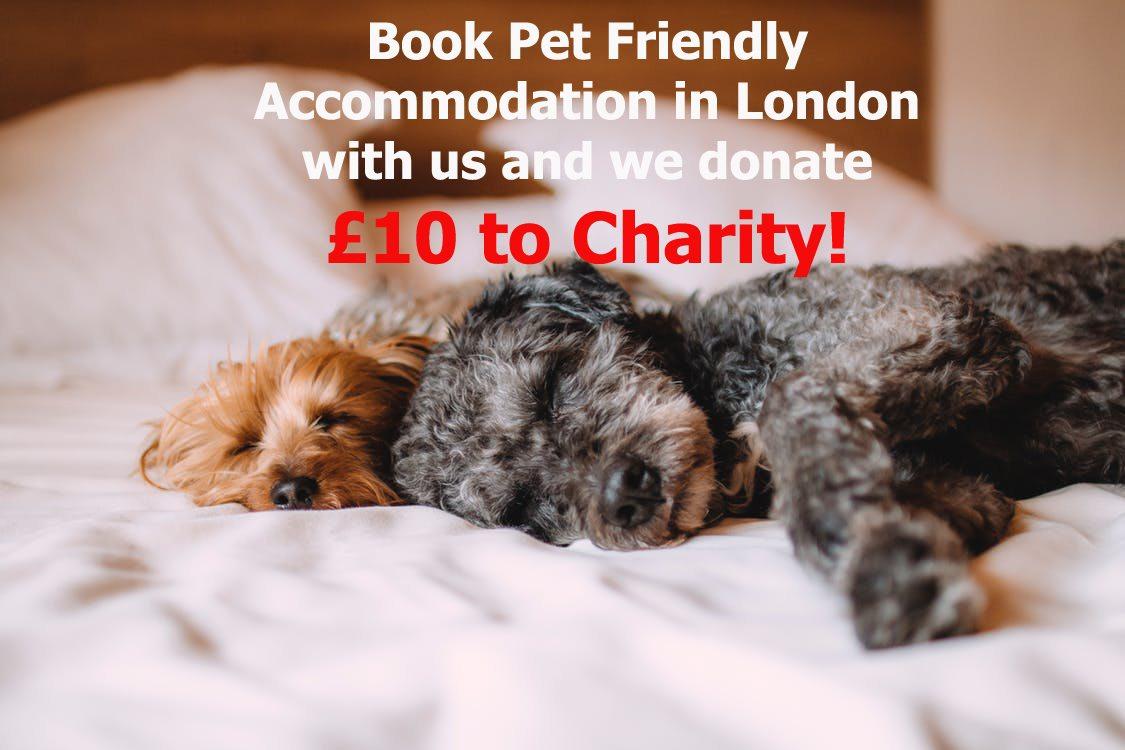 Pet Friendly Accommodation London Pet Friendly Serviced Apartments