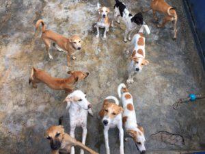 Urban Stay Pet Friendly Accommodation London Supports Animal Charities Worldwide 5