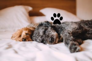 Visiting London with pets? Book pet friendly serviced apartments London with Urban Stay today! We offer the best dog friendly accommodation in London for your corporate relocation! Dog friendly holiday homes – London cat and dog friendly apartments – Better than a hotel!