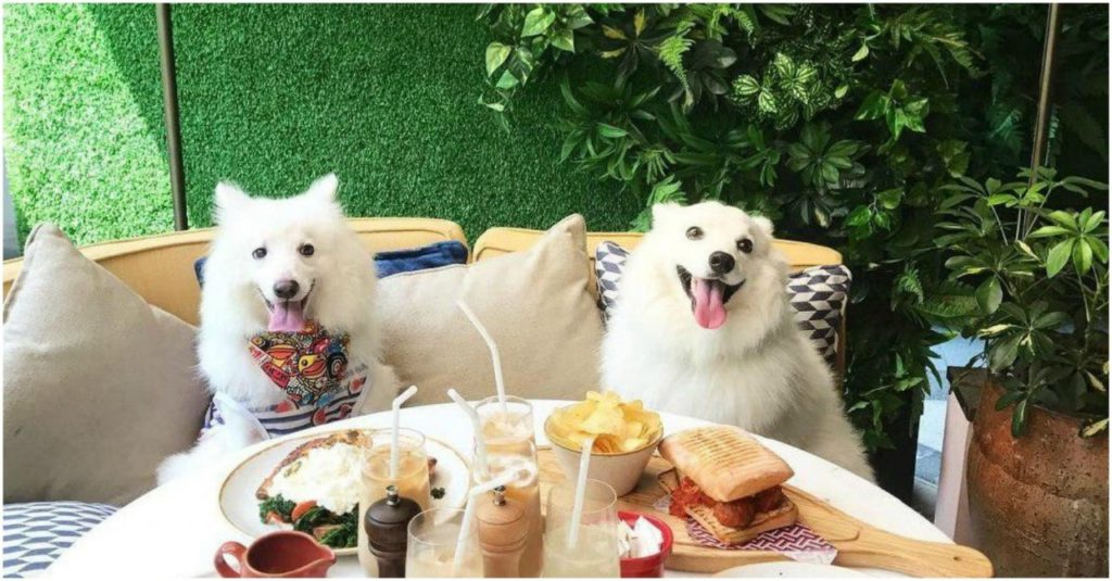 B2ap3 Large Pet Friendly Restaurants 2