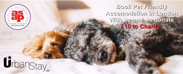 Pet-friendly-accommodation-London-pet-friendly-serviced-apartments-London-UK-Urban-Stay2-768x512