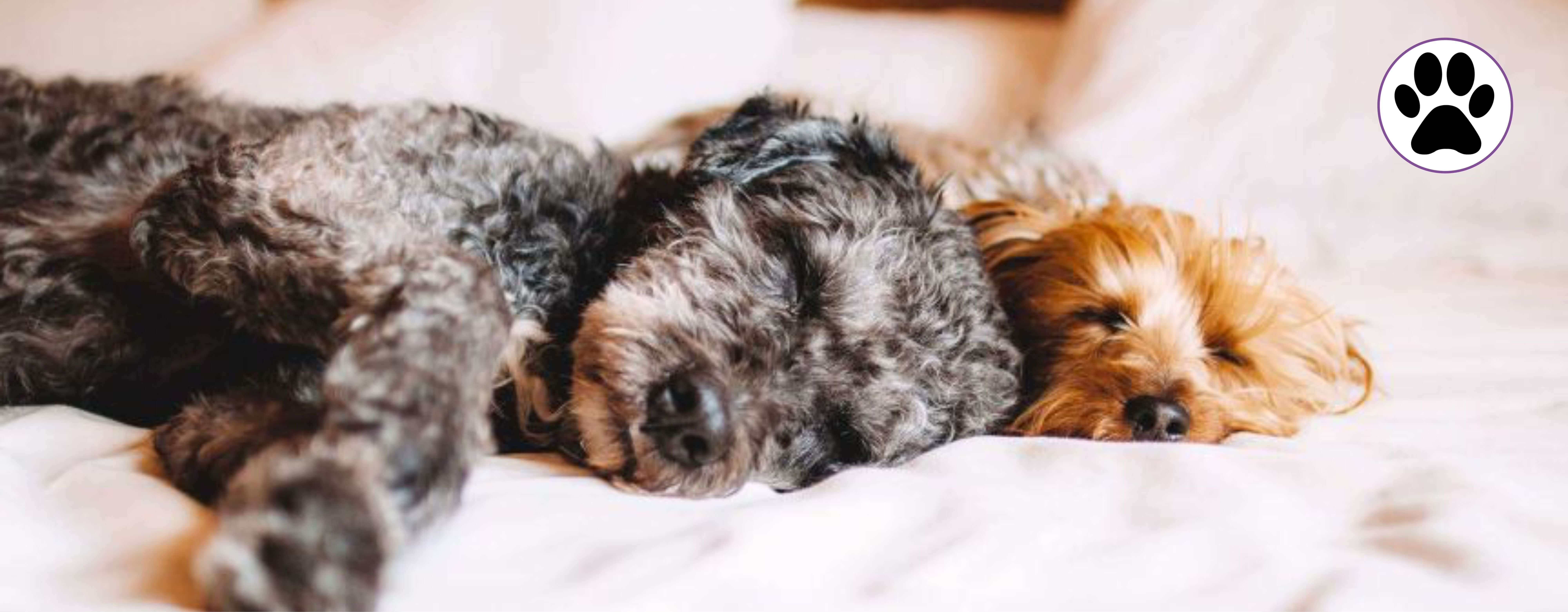Pet friendly serviced apartments london