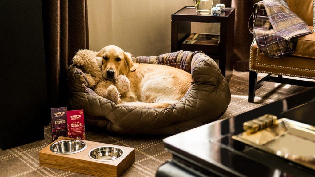 Pet Friendly Apartments London - Pet Friendly | Urban Stay