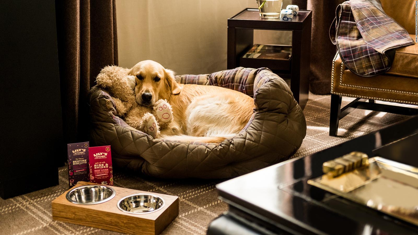 Pet Friendly Apartments West London