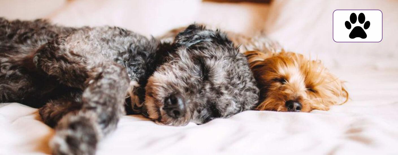 Pet-friendly-serviced-apartments-london